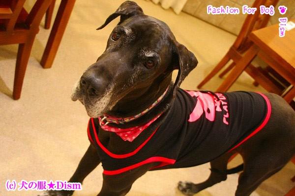 犬服 PLAYDOG★タンクトップ(中型犬用)【犬の服2点購入でメール便】ドッグウェア