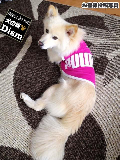 강아지 옷 PUWAN ☆ 메쉬 탱크 탑 2016 년 뉴 컬러 (초소형 견/잡동사니) 애완견 용품 고양이 용품