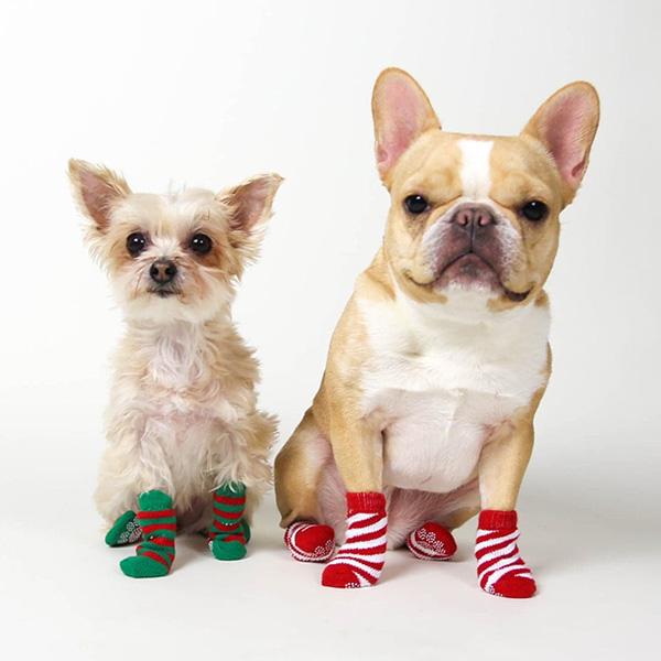 犬用靴下 PUPPIA ドッグソックス アーガイル 滑り止めゴム付き(小型犬、中型犬サイズ)【メール便なら】犬服 ドッグウェア 犬の服 パピア ARGYLE