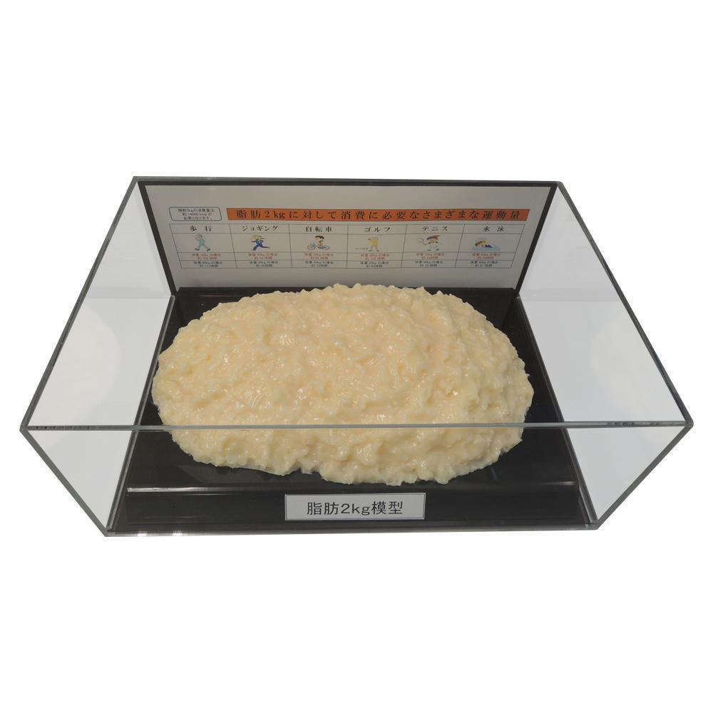 【代引き・同梱不可】脂肪模型フィギュアケース入 2kg IP-979