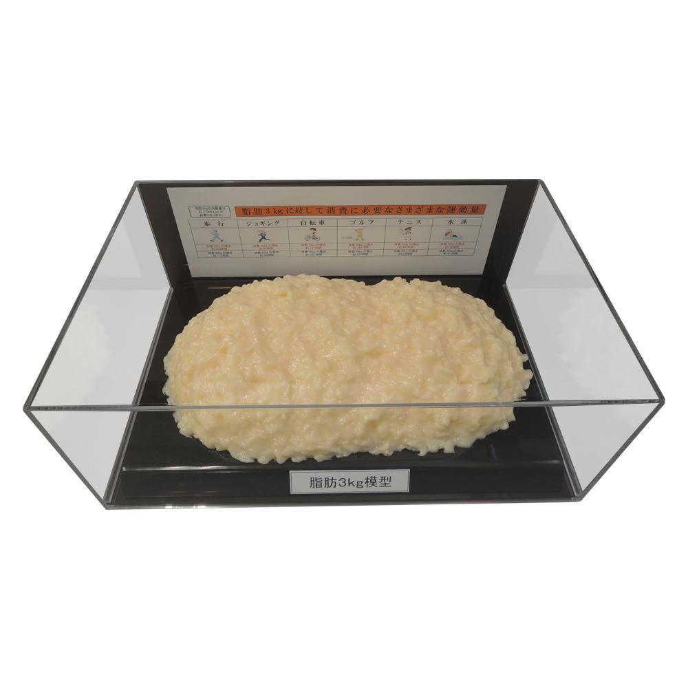 【代引き・同梱不可】脂肪模型フィギュアケース入 3kg IP-980