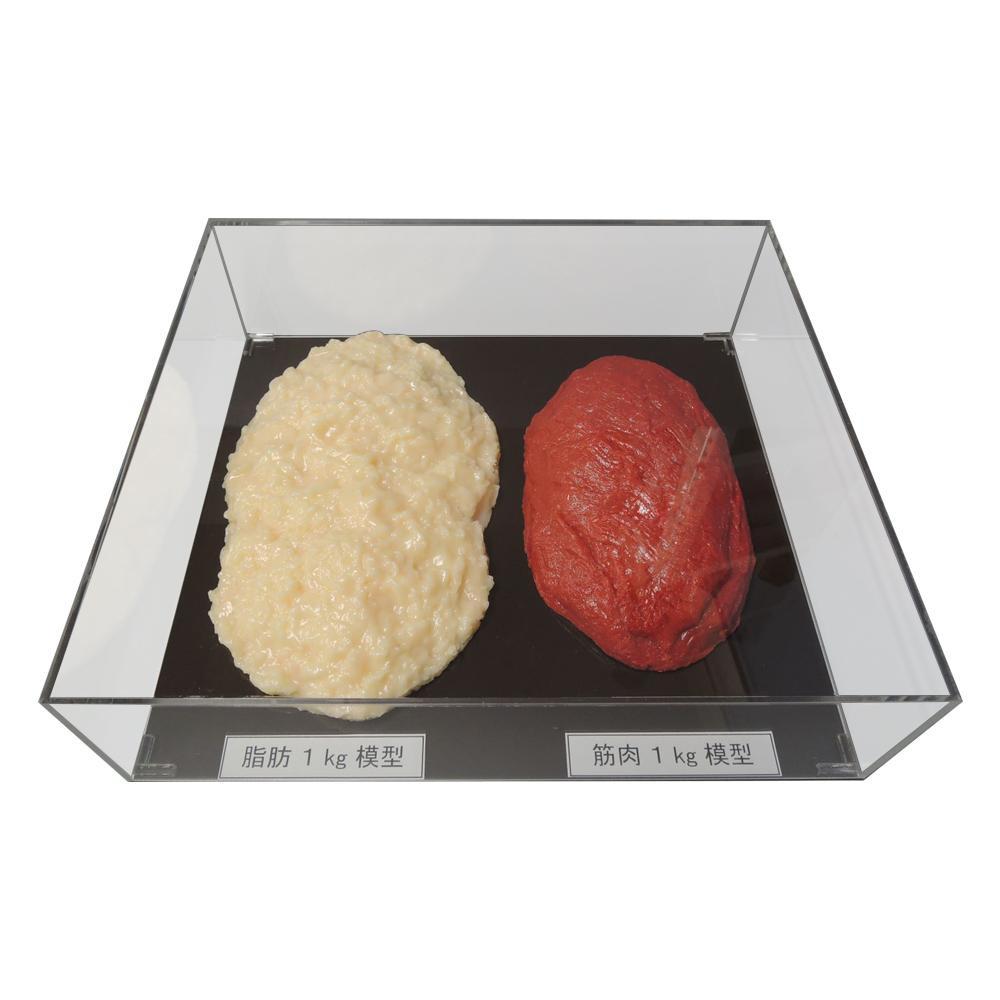 【代引き・同梱不可】脂肪/筋肉対比セット(アクリルケース入)1kg IP-982