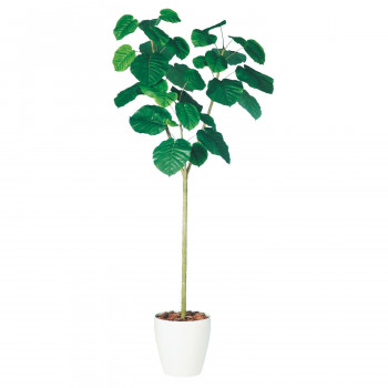 TOKA 人工樹木 【代引き・同梱不可】東北花材 ウンベラータ 98502