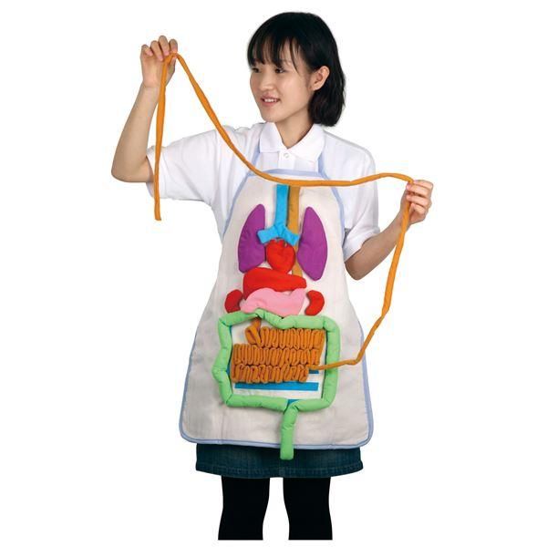 (まとめ)アーテック 内臓の大きさ説明エプロン 【×5セット】【日時指定不可】