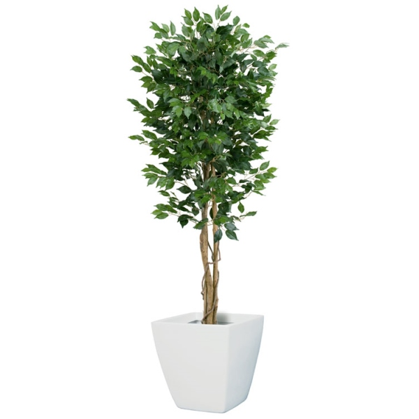 【法人様限定】180cmフィカス(ベンジャミン)ツリー(M)(ナチュラルトランク)《ポット別売り》(NGT2017M10)[フェイクグリーン リーフ 天然木 人工観葉植物 フィカスツリー フィカス ベンジャミン ツリー]