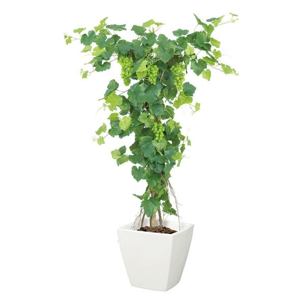 グレープツリー(M)(ナチュラルトランク)【インテリアグリーン(天然木と造花のコラボ!)】《ポット別売り》