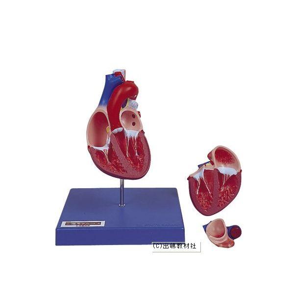 心臓モデル