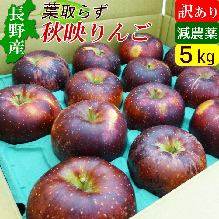 送料無料 林檎 りんご 祝開店大放出セール開催中 訳あり リンゴ 5キロ 秋映 わけあり 5kg 信州 全国一律送料無料 長野産 アウトレット 規格外