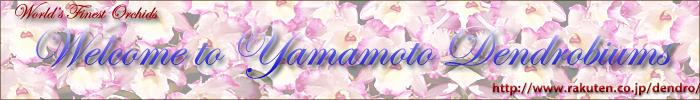 山本デンドロビューム園鉢物shop:ギフト、贈答用に最適の高品質のランの花、デンドロビュームをお届けします