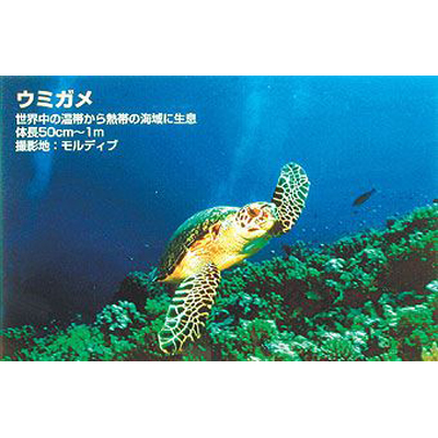 TOO <Too>バックライトフィルム FP-M[厚口] (表打ちタイプ) / 1118mmx20m IJR44-58PD