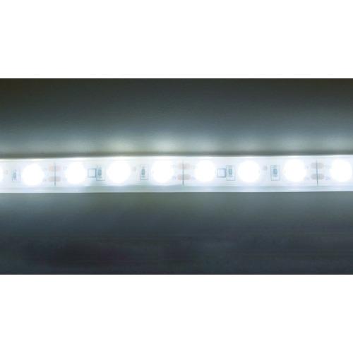 トライト トライト LEDテープライト 33mmP    5000K  3M巻 TP50333PN