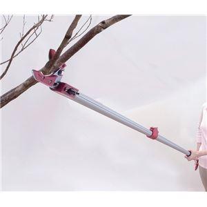 その他 伸縮式高枝切りハサミ 【4点セット】 ノコギリ/太枝切りハサミ/高枝切りハサミ/暫定ハサミ【代引不可】 ds-1569502