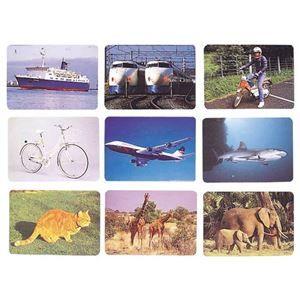 その他 DLM 言語訓練写真カード1 生物と乗物2214S ds-1915290