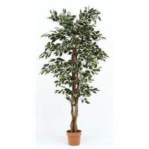 その他 観葉植物/フェイクグリーン 【フィカス B】 7号鉢対応 幅90cm 〔リビング ガーデニング〕 ds-1951467