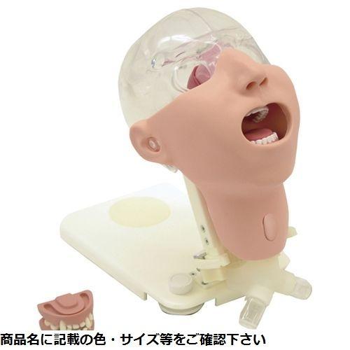 その他 京都科学 顎歯(正常) 11408-020 24-6476-11【納期目安:1週間】