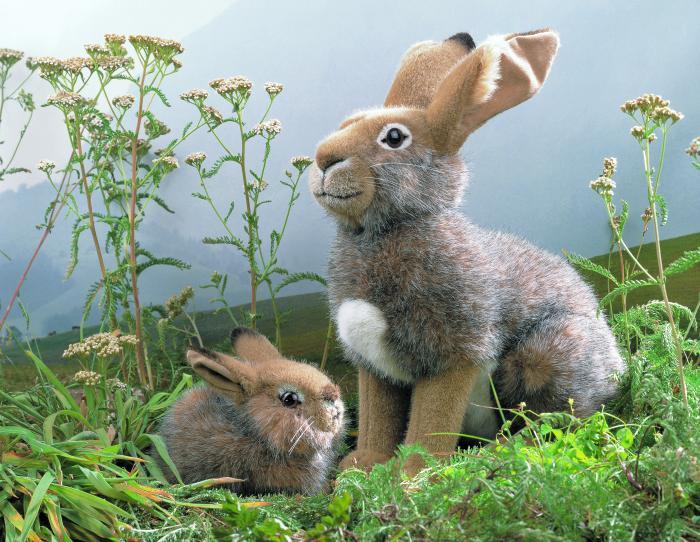 Kosen ケーセン ドイツ製 ぬいぐるみ 野うさぎ( ギフト プレゼント 誕生日 出産祝い 女の子 男の子 縫いぐるみ ウサギ) 児童館