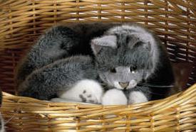 Kosen ケーセン ドイツ製 ぬいぐるみ ねそべり猫・グレー( ギフト プレゼント 誕生日 出産祝い 女の子 男の子 縫いぐるみ ねこ ネコ) 児童館