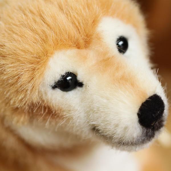 ケーセン 【柴犬】【送料無料(一部地域を除く)】
