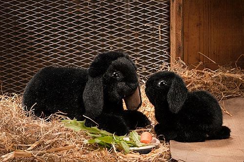 Kosen ケーセン ドイツ製 ぬいぐるみ たれ耳うさぎの子 黒( ギフト プレゼント 誕生日 出産祝い 女の子 男の子 縫いぐるみ ウサギ) 児童館