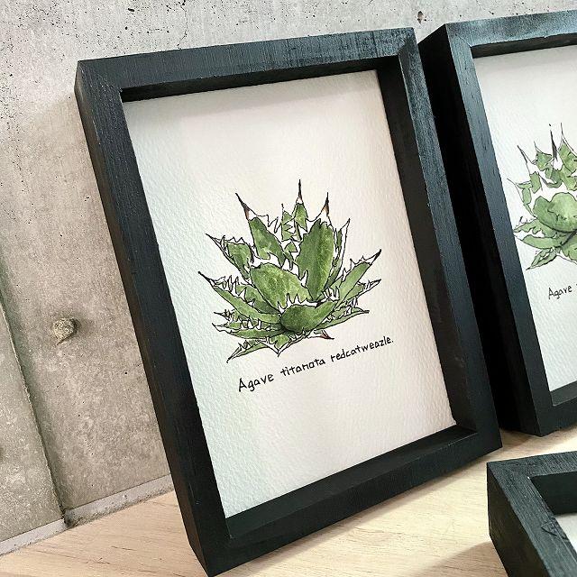 agave titanota painting アガベ チタノタ レッドキャット ウィーズル オリジナル デザイン画 国内正規総代理店アイテム ギフ_包装 写真画像はデザインソース 原画 額入り 3枚目 多肉植物 観葉植物 インテリア 商品には付きません