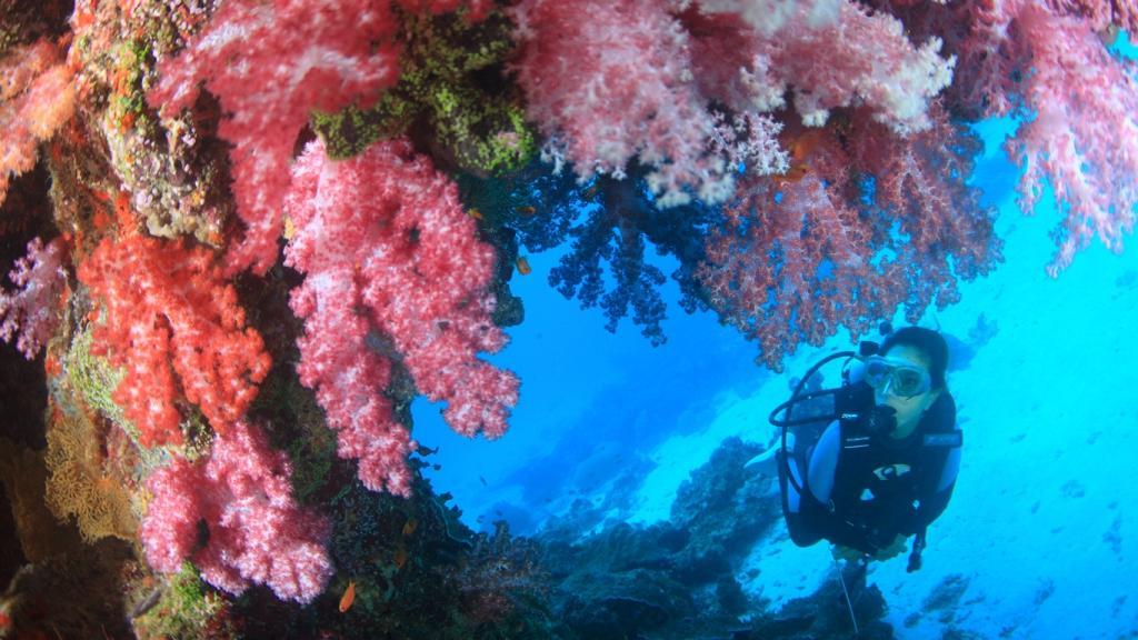 近海体験プラン