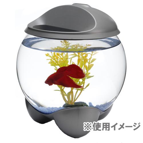 Dog Kan Spectrum Brands Japan Tetra Aquatherapy Lp Fish Tank