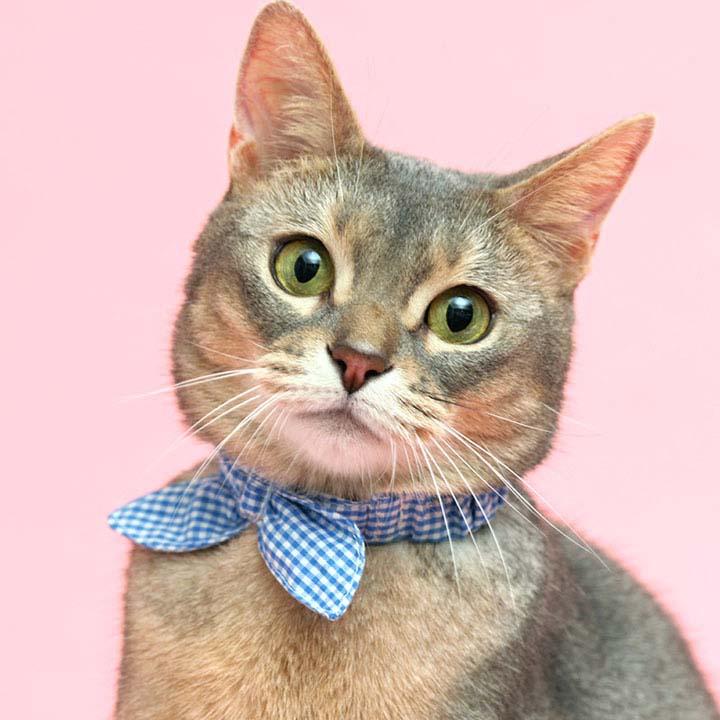 サイズが変えられるシュシュカラー 484355メール便 カラー 首輪 猫 キャット 可愛い チェック ペット 犬と生活 ギンガムピンク・ギンガムブルー【D】【B】【メール便】【代金引換、後払い決済不可・日時指定不可】 【MAIL】