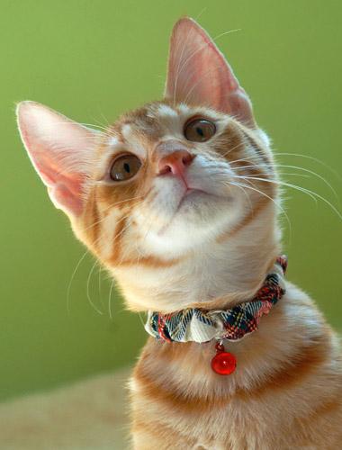 シュシュカラー タータンチェック M 452538メール便 カラー 首輪 猫 キャット 可愛い チェック ペット 犬と生活 レッド・ホワイト【D】【B】【メール便】【代金引換、後払い決済不可・日時指定不可】 【MAIL】