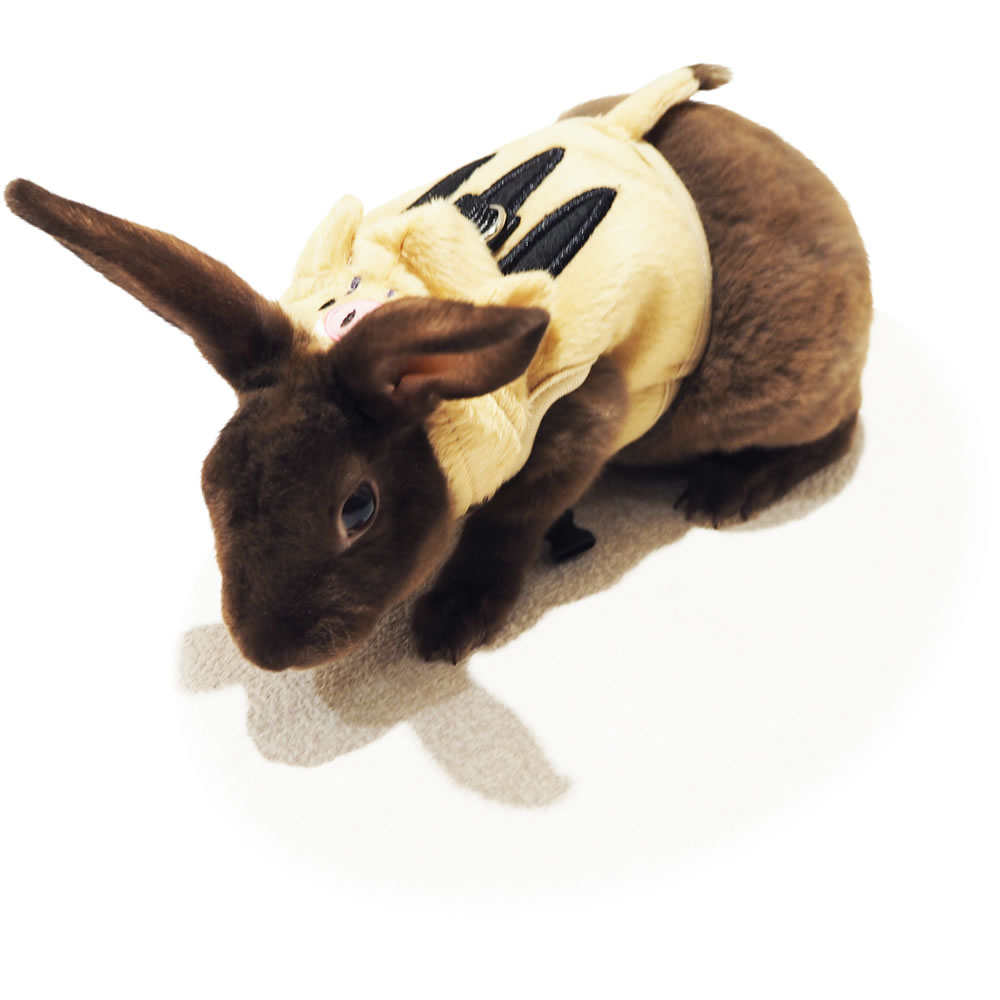 レインボー rabbit ランランハーネスウェア うりぼう