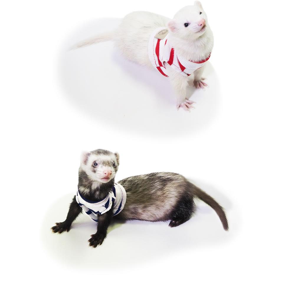 レインボー ferret ボーダータンクトップ
