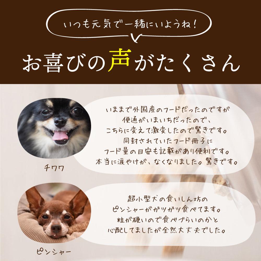 年齢 小型 の 犬 犬