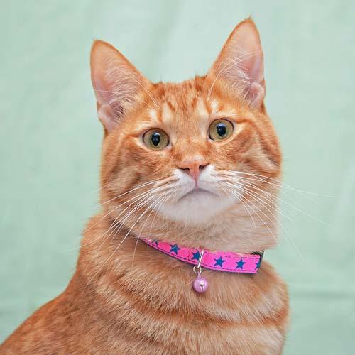 キャットカラー スターステッチ 437566 カラー 首輪 猫 キャット 可愛い 星 ペット 犬と生活 ピンク・イエロー・ブルー・レッド×ネイビー【D】【B】 【メール便】 【代金引換、後払い決済不可・日時指定不可】 【MAIL】