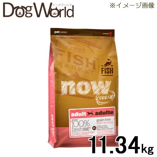 高級な ポイント10倍 ナウフレッシュ NOW 大幅値下げランキング FRESH フィッシュアダルト 犬用 11.34kg グレインフリー