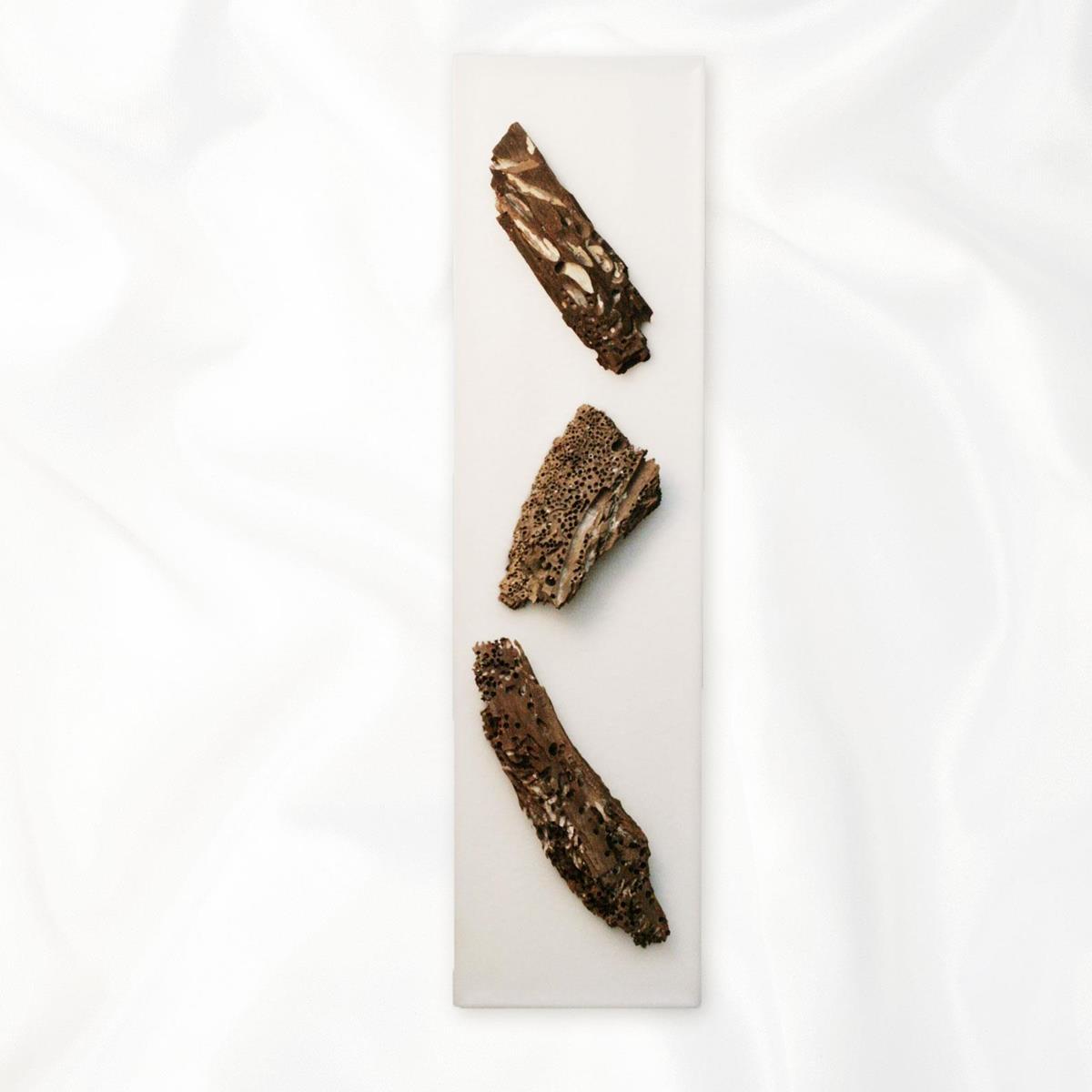 【アウトレット】イタリア・トリノ発 ルマーニ工房のワックスアート 流木 〔L〕