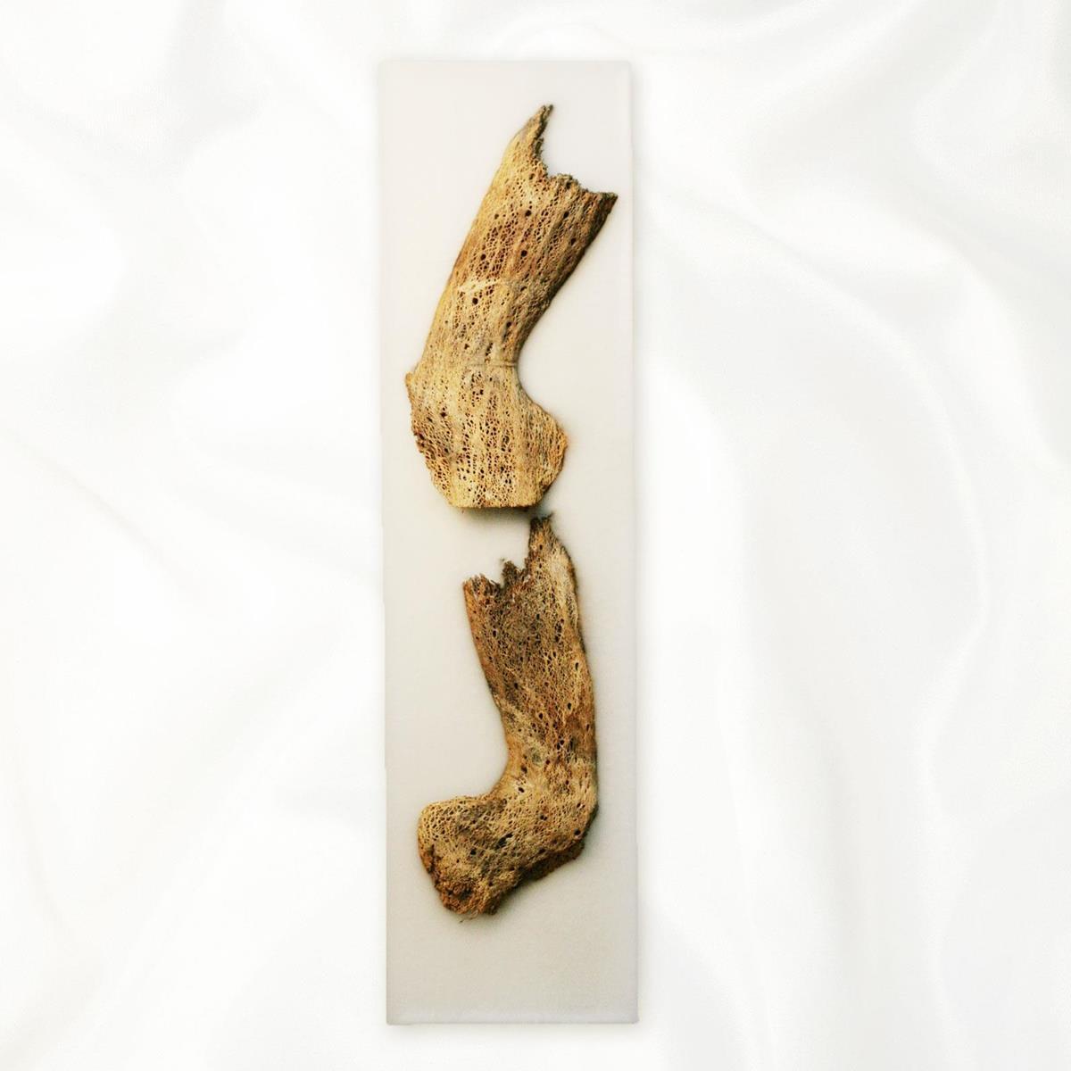 ?SALE?【アウトレット】イタリア・トリノ発 ルマーニ工房のワックスアート 海流木〔L〕