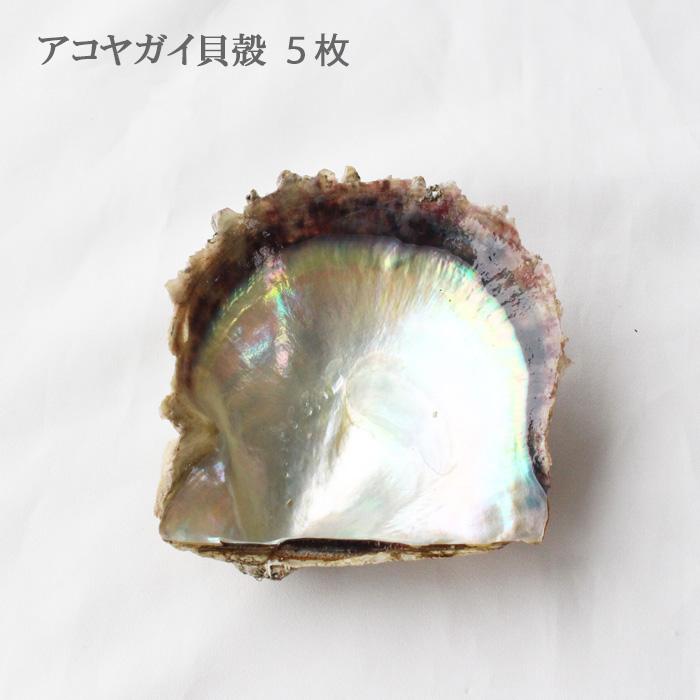 あこや貝の貝殻です 購買 アクセサリー置き場にしたり アコヤガイ貝殻-5枚セット <セール&特集> 工作に使ったり