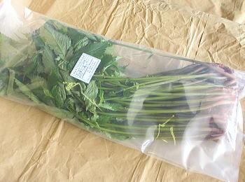 ウワバミソウ バーゲンセール みず 山菜 1kg クール便 山形県産 お買得