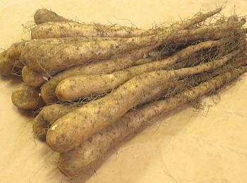 国際ブランド 長芋種芋 長いも種芋1kg 年末年始大決算