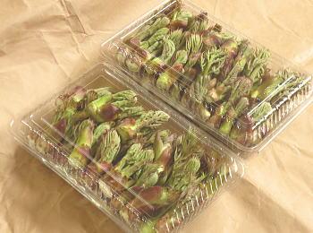 山形のおいしい山菜 たらの芽500g 250g×2パック クール便 山形県産 永遠の定番 安心の実績 高価 買取 強化中