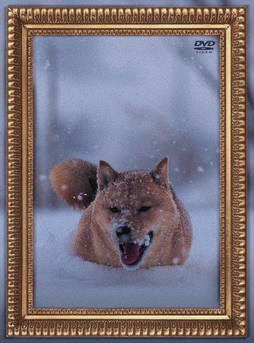 【新品】 レオナルド犬プリオ(通常盤) [DVD]