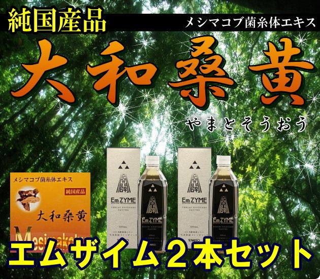 【エムザイム2本セット】純国産品 メシマコブ菌糸体エキス 大和桑黄(やまとそうおう)【1.2gx60包(72g)】