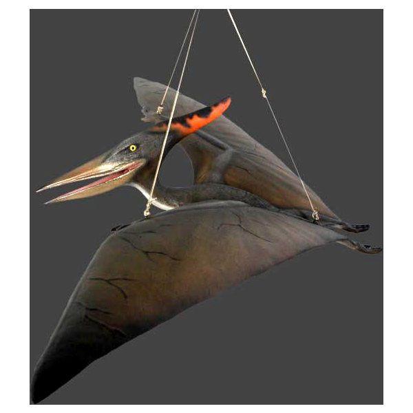 ベビー・プテラノドン(翼竜)フィギュア(恐竜等身大フィギュア)