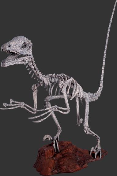 恐竜スケルトン(ガイコツ) 等身大フィギュア(恐竜等身大フィギュア)