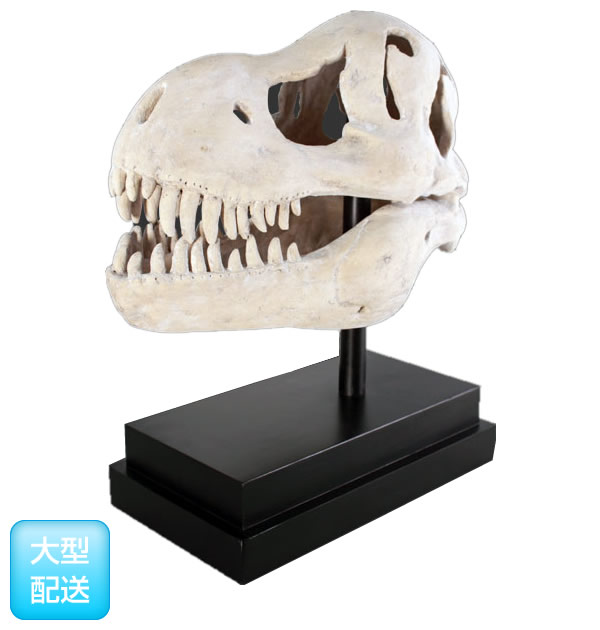 T-Rexの頭蓋骨(ティーレックス) フィギュア(恐竜等身大フィギュア)