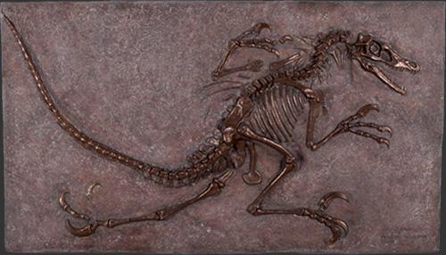 ヴェロキラプトルの化石・ブロンズ 等身大フィギュア(恐竜等身大フィギュア)