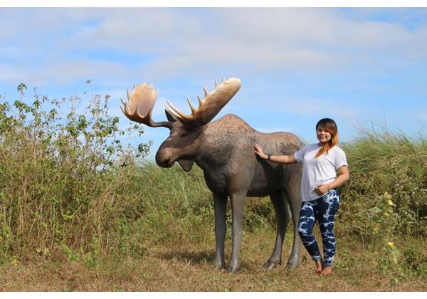 アニマルビッグフィギュアシリーズ【ビッグ ムース Moose(鹿)】ヘラジカ(等身大フィギュア)