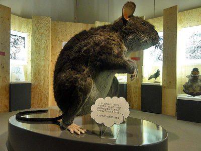 アニマルビッグフィギュアシリーズ【巨大な ハツカネズミ(全高2m)ネズミ】(等身大フィギュア)