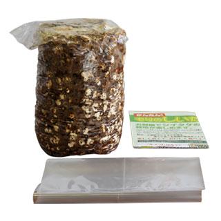 표고버섯 재배 키트 자유 연구와 어린이 식 생활 교육!