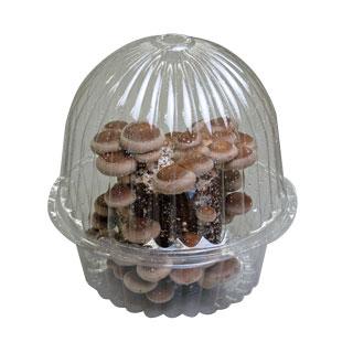 버섯 재배 키트 전용 용기 자유 연구와 어린이 식 생활 교육!
