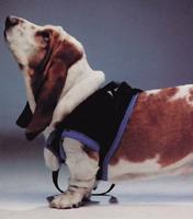 ウォークアバウトハーネス(前部) XL ペット、ペット用品、介護補助、医療補助